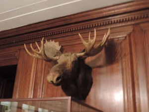 This moose head sits at the end of the TR gallery
